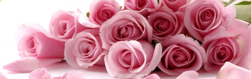 Cvijećara ORHIDEJA
